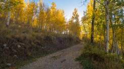Climbing through aspen forest