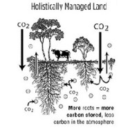 Can Grasslands, The Ecosystem Underdog, Play an Underground Role in Climate Solutions?