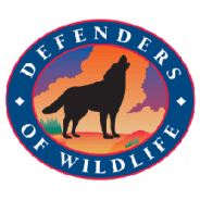 Court Lifts Injunction Blocking Mexican Gray Wolf Releases