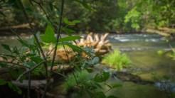 Creek side