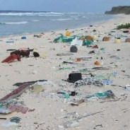 South Pacific Island Uninhabited For 600 Years Is Drowning In Plastic