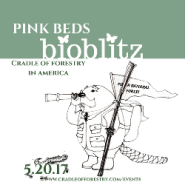 Cradle of Forestry Invites Nature Enthusiasts to Pink Beds Bioblitz