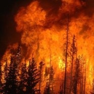 What you need to know about wildfire safety