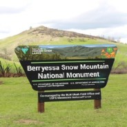 At Berryessa National Monument, Wildflowers and Rebirth