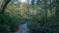 Lower Alum Cave Creek