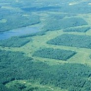 Fragmented Forests Causing Animals to Vanish