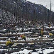 Forest crews use hand tools to restore Anaconda-Pintler trails damaged by fire