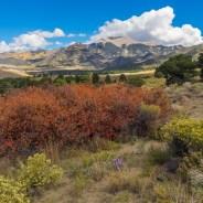 The benefits of public wildlands, explained