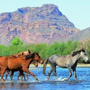 Keep an eye out for Salt River wild horses on this Mesa-area hike