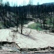 It's not only trees — wildfires imperil water too