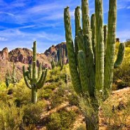So Many Cacti Are Getting Stolen From Arizona's National Park, They're Being Microchipped