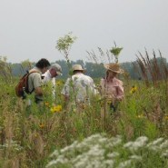 Five Reasons to Hike the Midewin National Tallgrass Prairie
