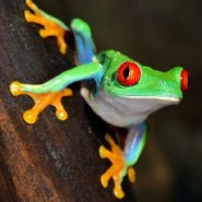 Why the loss of amphibians matters