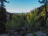Limber pine forest