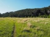 Through the next meadow