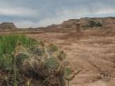 Cactus on the arroyo's edge