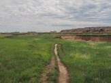 Grassland above the arroyo
