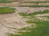 Crossing the arroyo
