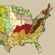 The State of the Nation's Forests