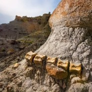 Yet-to-be-discovered dinosaur fossils may be at risk after Trump slashed the size of Grand Staircase-Escalante