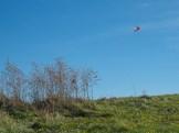 Kite over the summit