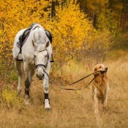 Why horses can poop on the trails but your dog can't