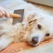 Your shedding dog can help birds this spring