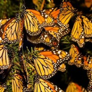 From monarch butterflies to gray whales, animals are on the move. Here's how travelers can tag along on their migratory journeys.
