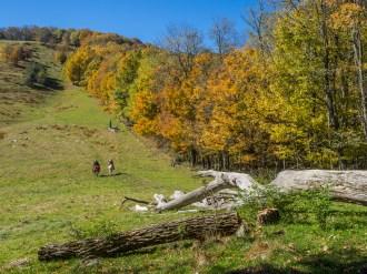 Horses climb towards the summit of Hemphill Bald at Cataloochee Ranch