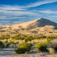 Pick Mojave National Preserve over Joshua Tree: Twice the size, a quarter the visitors, all the beauty