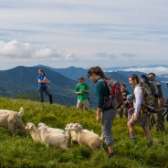 'You're all goats today:' Maine farm opens up to human and goat hiking