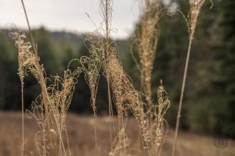 Grassy hearts at the trailhead