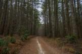 Tarklin Branch Trail