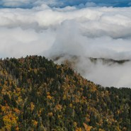 The Great Smoky Mountains' iconic clouds are helping to protect the region from climate change – for now