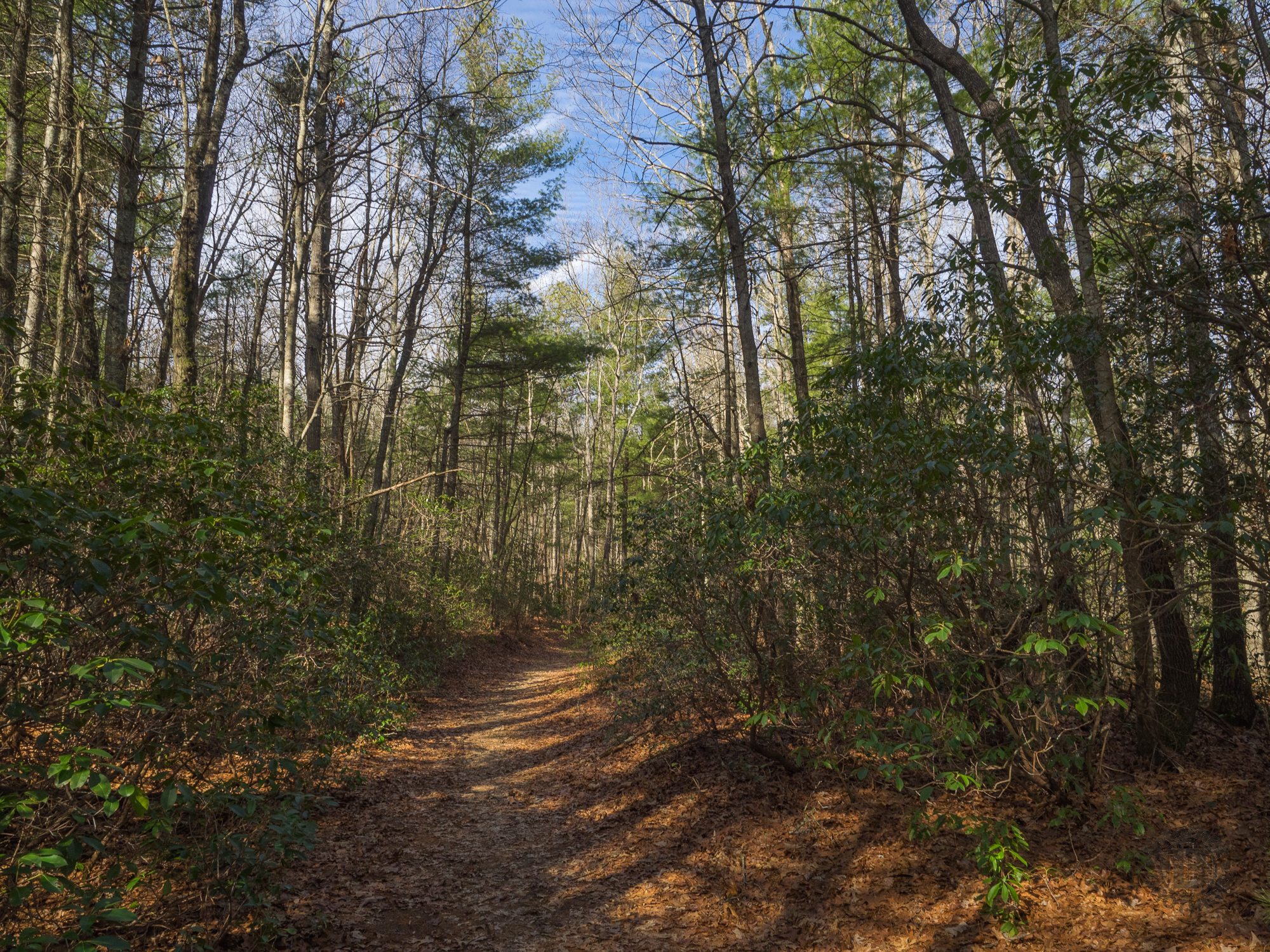 Rocky Ridge and Stone Mountain Trails, DuPont State Forest