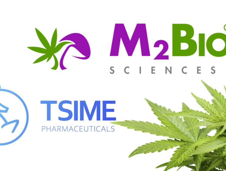 Tsime-pharmaceuticals-$wuhn-wuhan-general-group-m2bio-sciences-internet-bull-report