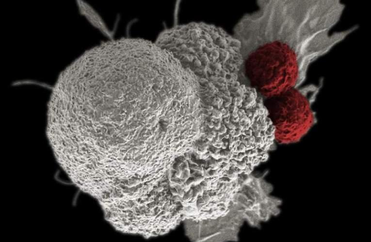 Megtalálták a rák ellenszerét?