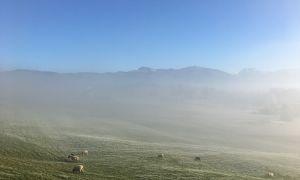 Schafe im leichten Nebel unter blauem Himmel