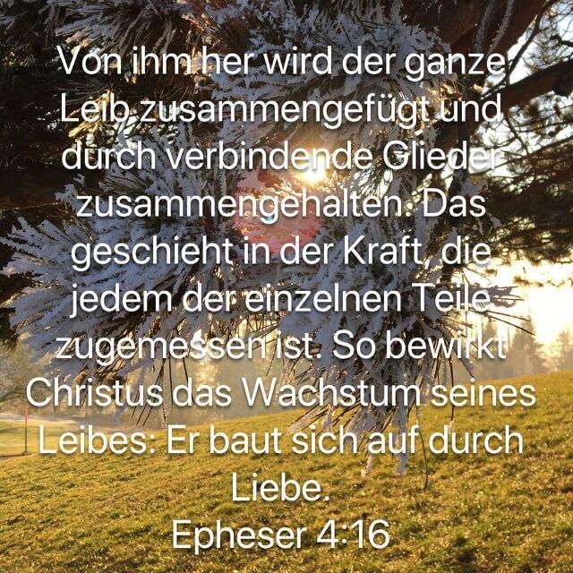 Bibelvers aus Epheserbrief 4,16 auf Bild mit gefrorenen Föhrennadeln im Sonnenuntergang