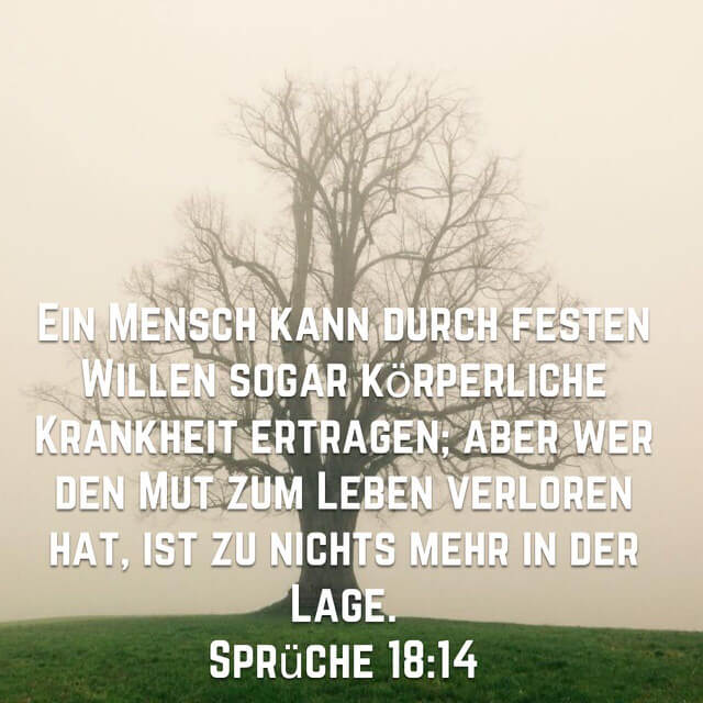 Spr_18_14 Bibelvers mit kahlem Baum im Nebel