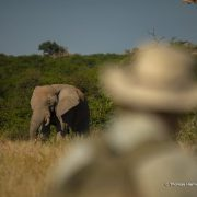 Central Tuli Game Reserve becomes first 'Smart Parks system' in Botswana