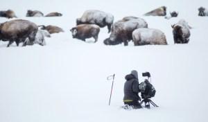 Filming of Wild Yellowstone (PRNewsFoto/Brain Farm)