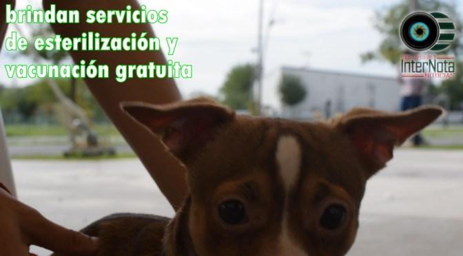 BRINDAN SERVICIOS DE ESTERILIZACIÓN Y VACUNACIÓN GRATUITA.