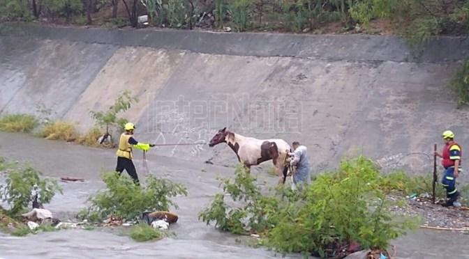 RESCATAN A CABALLO QUE TÉRMINO ATRAPADO EN EL ARROYO EL OBISPO.
