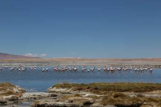 Cumbres Atacama_TARA---FLAMENCOS