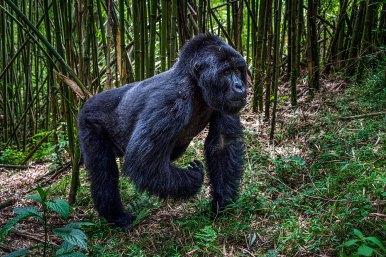 Wilderness-Rwanda-08