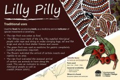 Nimbin Rocks Indigenous Interpretive Signs