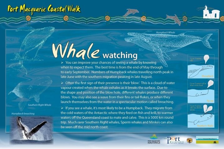 Whale watching signage, Coffs Coast