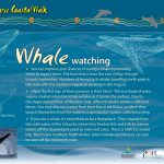 Whale Watching Sign - Port Macquarie Coastal Walk