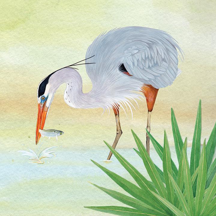NON-PROFITS_BayouPA_Great_Blue_Heron